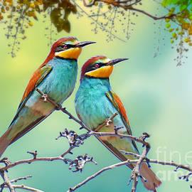 Little Merops by Morag Bates
