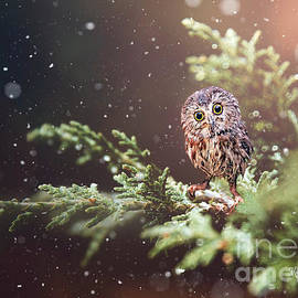 Little Owl by Morag Bates
