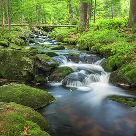 Little Stream in the Forest by Tobias Luxberg
