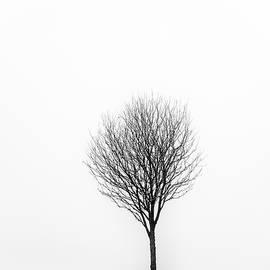 Little Tree by Grant Glendinning