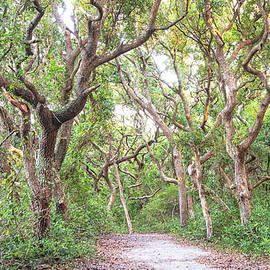 LIve Oak Lined Nature Trail - Fort Macon State Park by Bob Decker