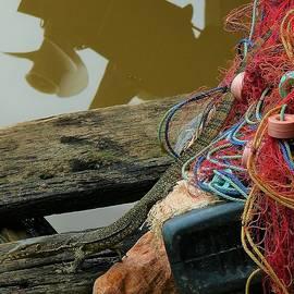 Lizard at the water by Robert Bociaga
