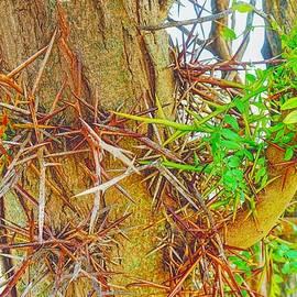 Locust TreeNicodemusKS by Darius Xmitixmith
