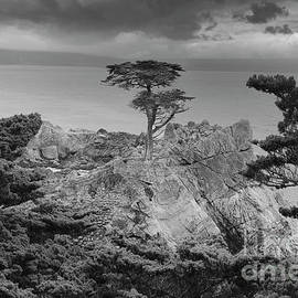 Lone Cypress BW Clouds California  by Chuck Kuhn