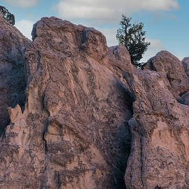 Lone Tree at Garden of the Gods by Sw Photography