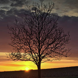 Lone Tree at Sunrise First Day of Stay at Home Order by Chris Pappathopoulos