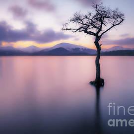 Lone tree dusk at Milarrochy Bay, Loch Lomond, Scotland
