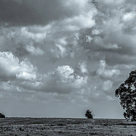 Lone Tree Landscape, Black and White by Marcy Wielfaert