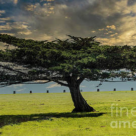 Lone Tree by Mitch Shindelbower
