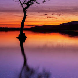 Lone tree reflections at Milarrochy Bay, Loch Lomond, Scotland by Neale And Judith Clark