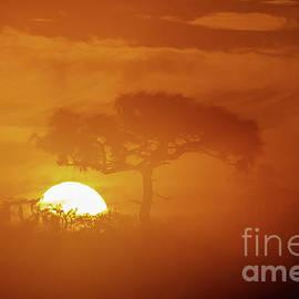 Lone Tree Sunrise by Tom Claud
