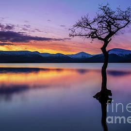 Lone tree sunset at Milarrochy Bay, Loch Lomond, Scotland by Neale And Judith Clark