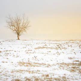 Lone Tree Sunset by Jordan Hill