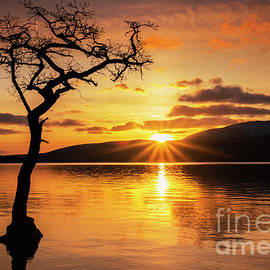 Lone tree sunset starburst at Milarrochy Bay, Loch Lomond, Scotland by Neale And Judith Clark