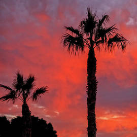 Lonely Palm At Sunset by Robert Bales