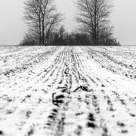 Lonely trees by Mike Santis