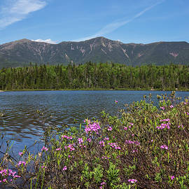 Lonesome Lake Spring Flowers by Chris Whiton
