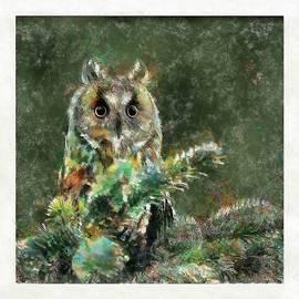 Long-eared Owl by Maciek Froncisz