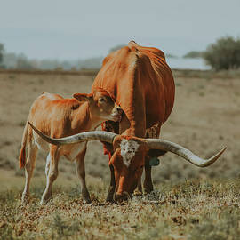 Longhorn Cow and Calf by Riley Bradford