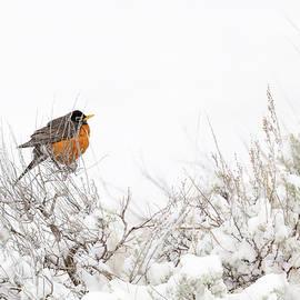 Longing For Spring by Ann Skelton
