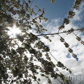 A May Morning by Kathryn Jones