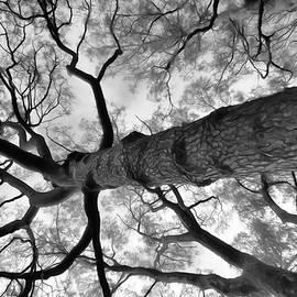 Looking Upward by Yolanda Caporn