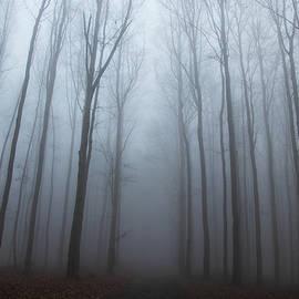Lost in forest by Vaclav Sonnek