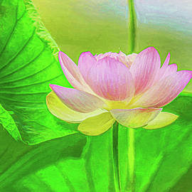 Lotus Enlightenment  by Kevin Lane