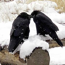 Love Birds by Debra Orlean