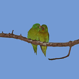 Love Birds by Marlin and Laura Hum