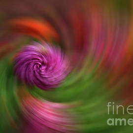 Love is Love Swirl by Jane Tomlin