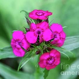 Lovely Flowers Blooming in June by Ann Brown