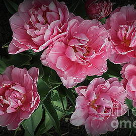 Lovely in Pink - Parrot Tulips by Dora Sofia Caputo