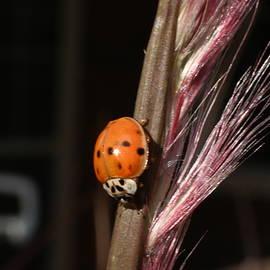 Lovely Ladybug  by Katy L