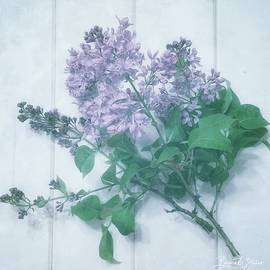 Lovely Lilacs by Barbara Zahno