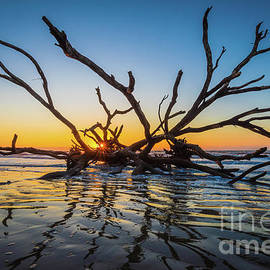 Low Country Beach Skeleton by Inge Johnsson