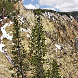 Lower Falls And Grand Canyon Of The Yellowstone 2 - Spring by John Trommer