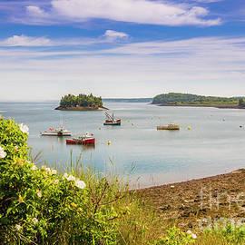 Lubec Harbor by Alana Ranney