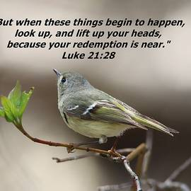 Luke 21 28 Look Up by Marlin and Laura Hum