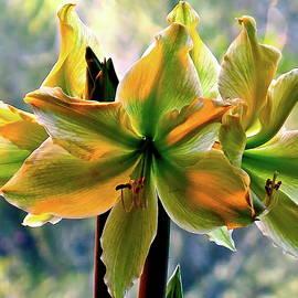 Luminous Amaryllis Macro by Bonnie See