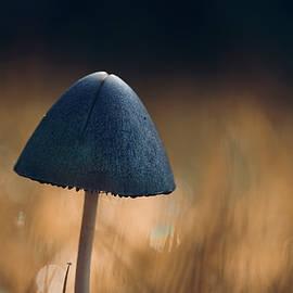 Luminous fungi by Helen Kelly