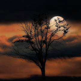 A shy moon by Rita Di Lalla