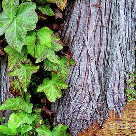 Luscious Growth by Mary Mikawoz