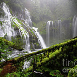 Lush Greens and Mist at Panther Creek Falls in Columbia River Gorge  by Tom Schwabel