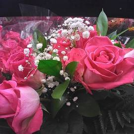 Luxurious PInk Roses by Charlotte Gray