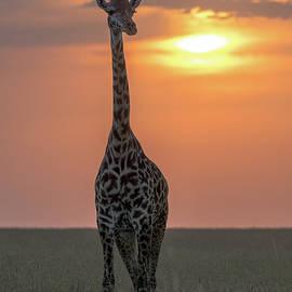 Maasai Giraffe by Eric Albright
