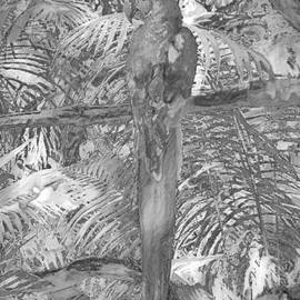 Macaw in GQ Pose, in Black and White by Banyan Ranch Studios