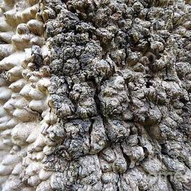 Macro of Textured Bark on aged Gum Tree.