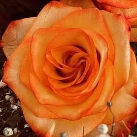 Macro Single Orange Rose by Femina Photo Art By Maggie