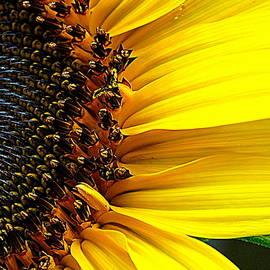 Macro Sunshine by Arlane Crump